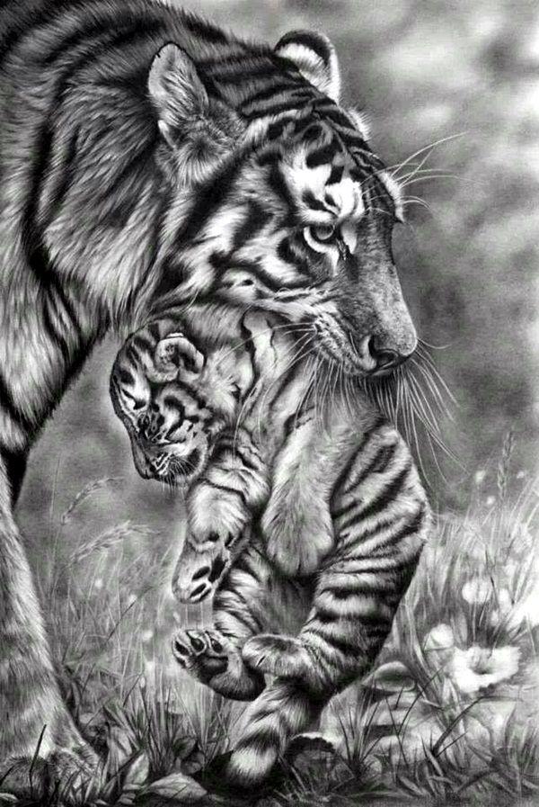 40 Realistic Animal Pencil Drawings | Pencil - Drawings ...