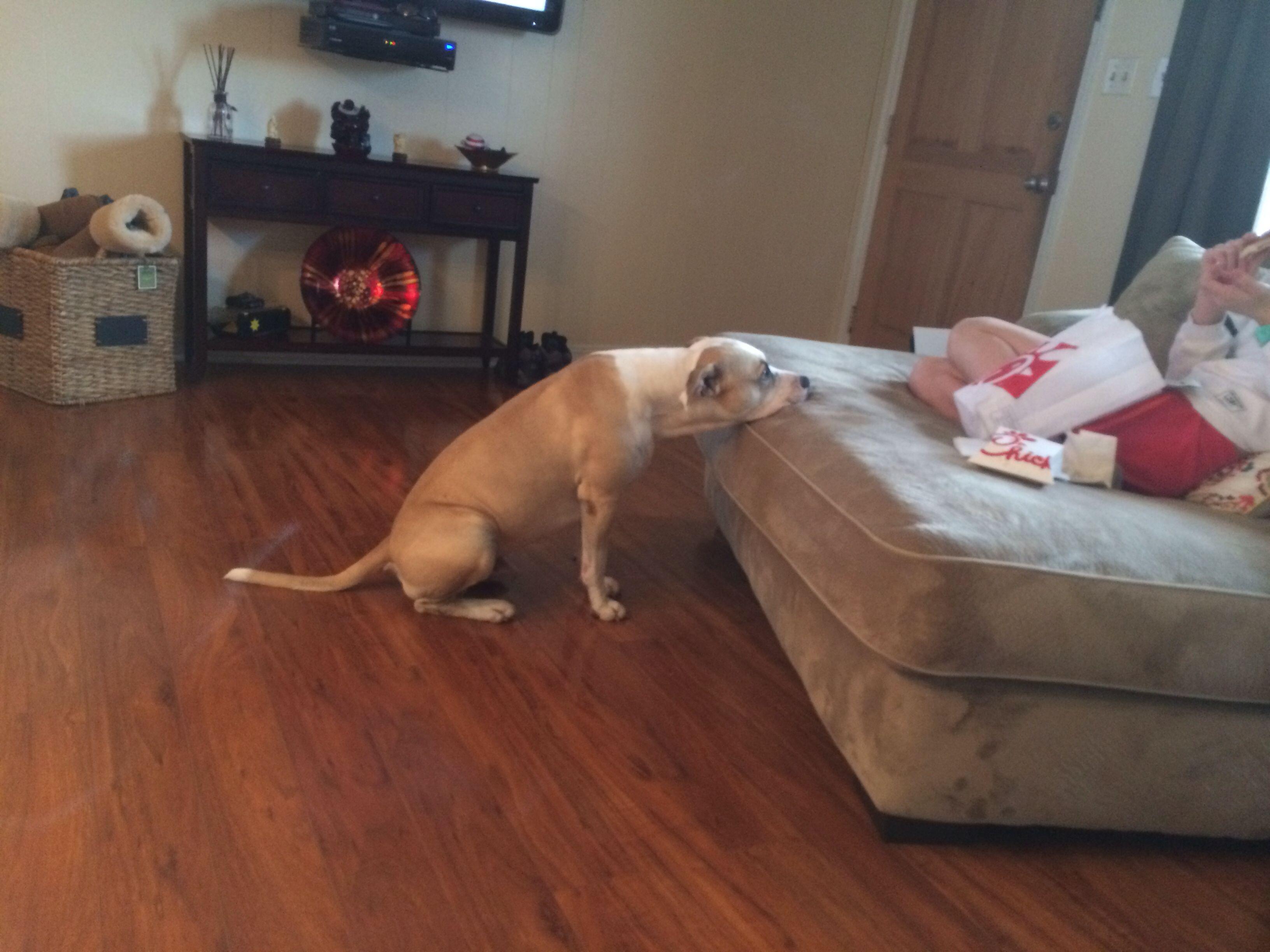 My pitiful dog
