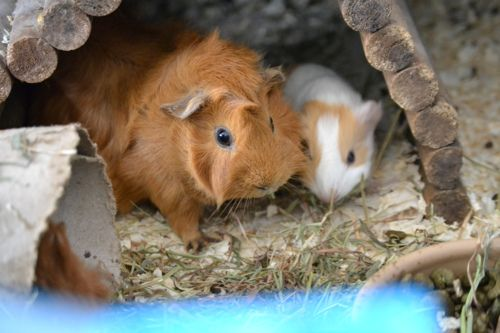 Momma Pig and Daughter