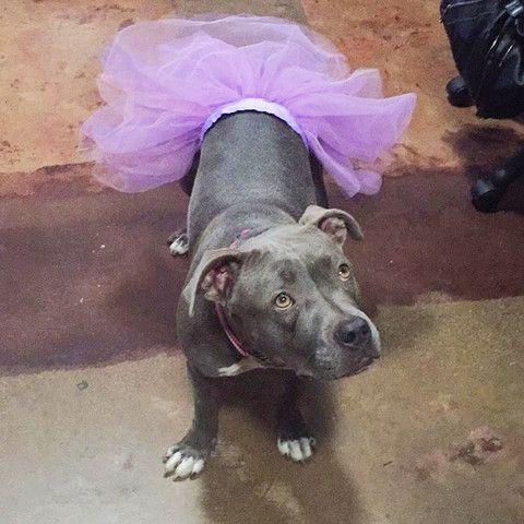 Joyeux Hallowe En From Fleur Dog Halloween Costumes Dog