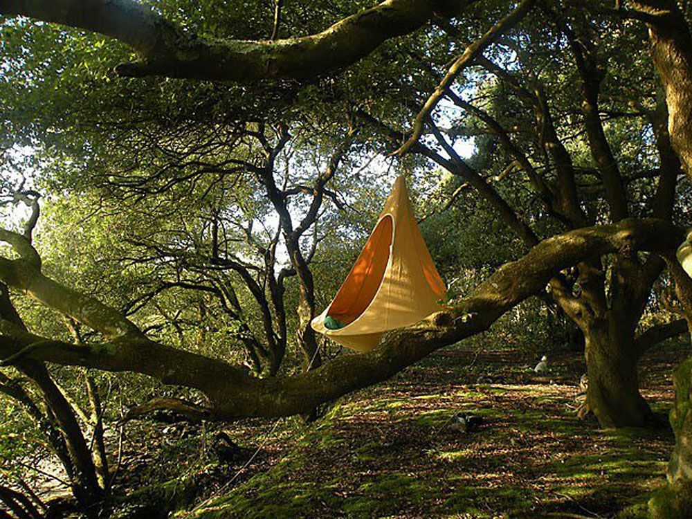 Cozy Cacoon Is Part Hammock Part Tree Tent All Fun Great Ideas