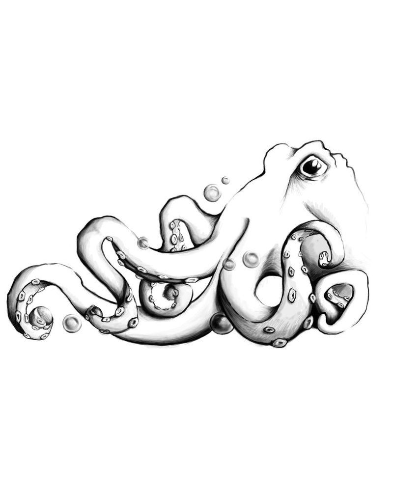 octopus drawing black and white google search animals