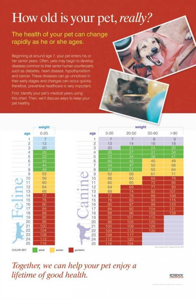 cat and dog chart Dog ages, Senior pet care, Pet hacks