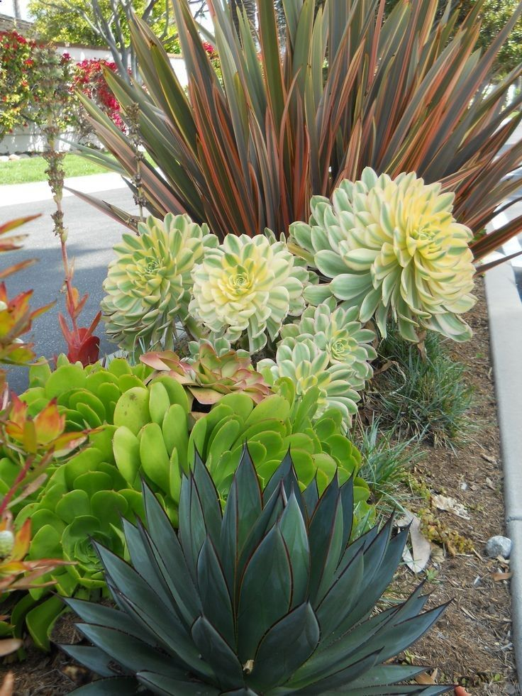 34 Simple But Effective Front Yard Landscaping Ideas On A Budget Rock Garden Landscaping Succulent Landscaping Drought Tolerant Garden