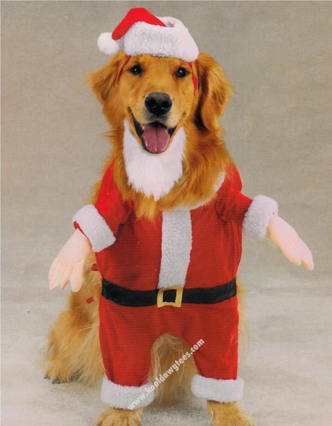 Pet Costume Casual Canine Kris Kringle Size X Small Dog Costumes