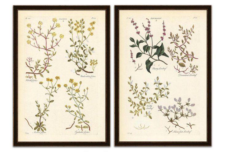 Soicher Marin, Types of Botanicals