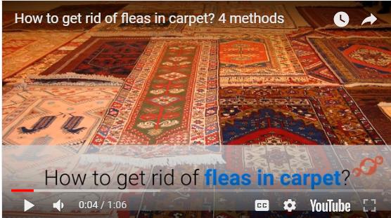 How To Get Rid Of Fleas In Bedroom
