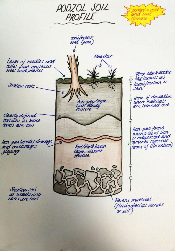 Podzol Soil Profile Sqa Highers Exams Diagram Revise Geography Podzol Soil Profile Coniverous Pine Horizons School Projects Soil School