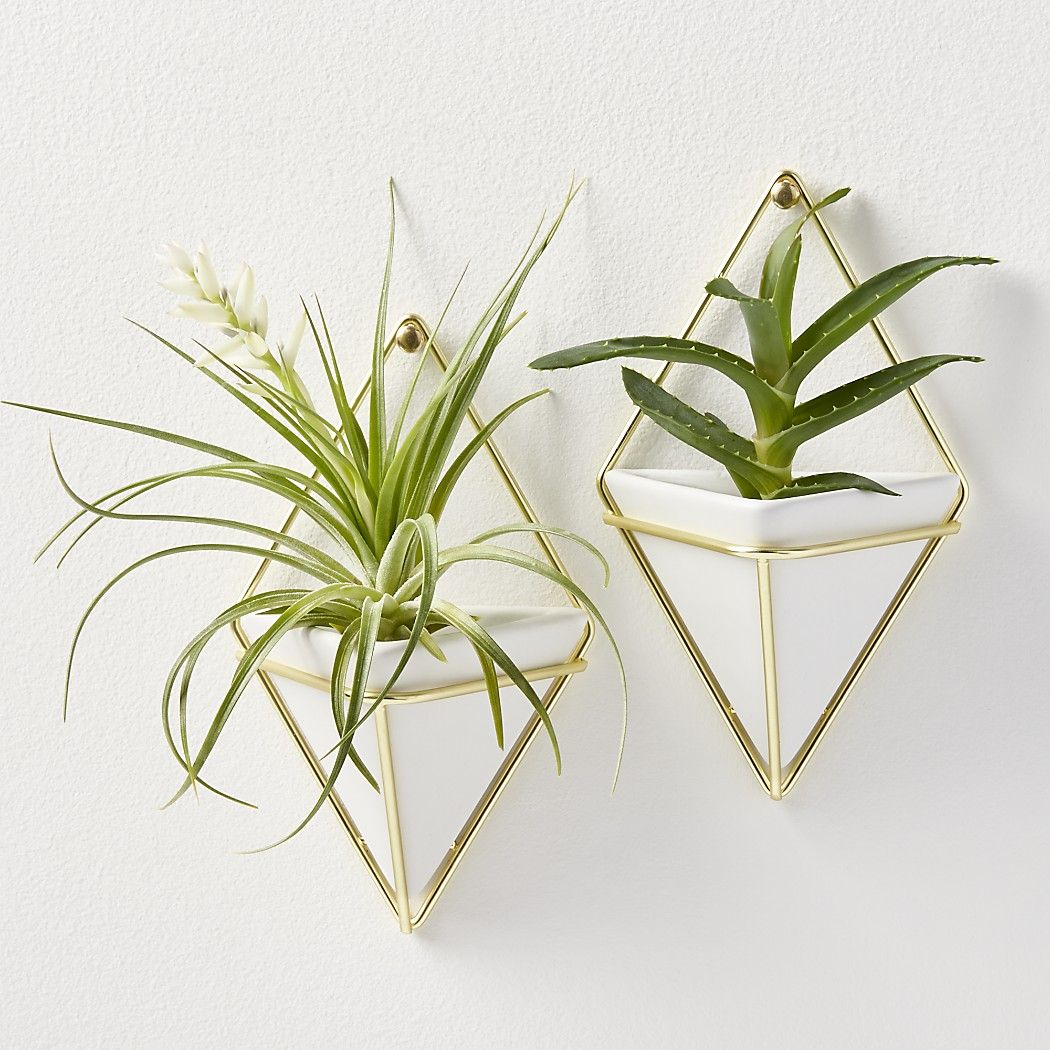 Browse our collection of decorative vases including tall bud and set of 2 trigg small wall vases clean white stoneware inside a deconstructed diamond creates a unique vase or hanging storage piece from reviewsmspy