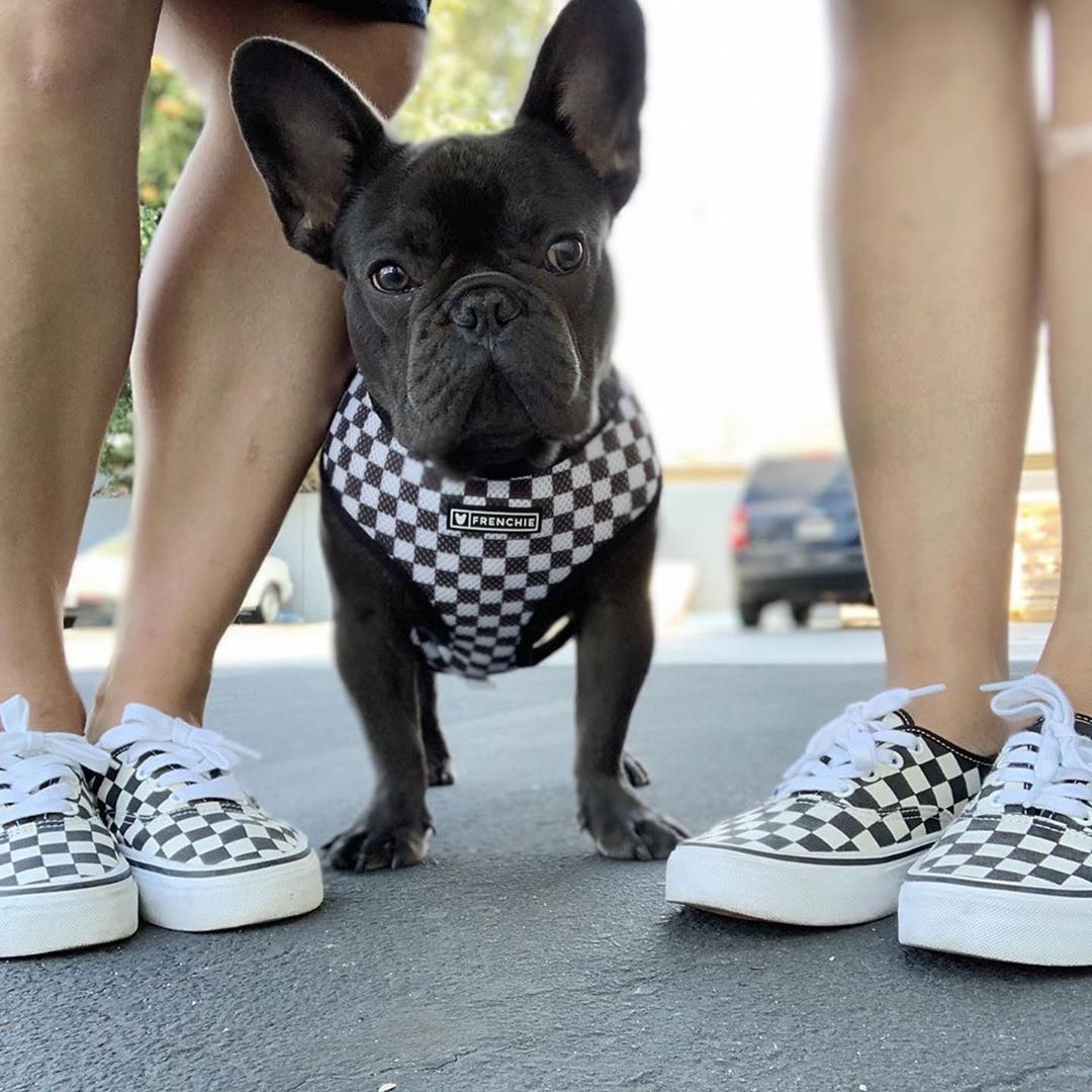 Pin Emisunday Bulldog Animals French Bulldog