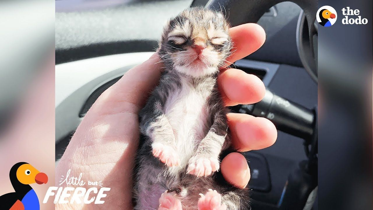Newborn Kitten Who Was Frozen Solid Grows Up To Be Strong