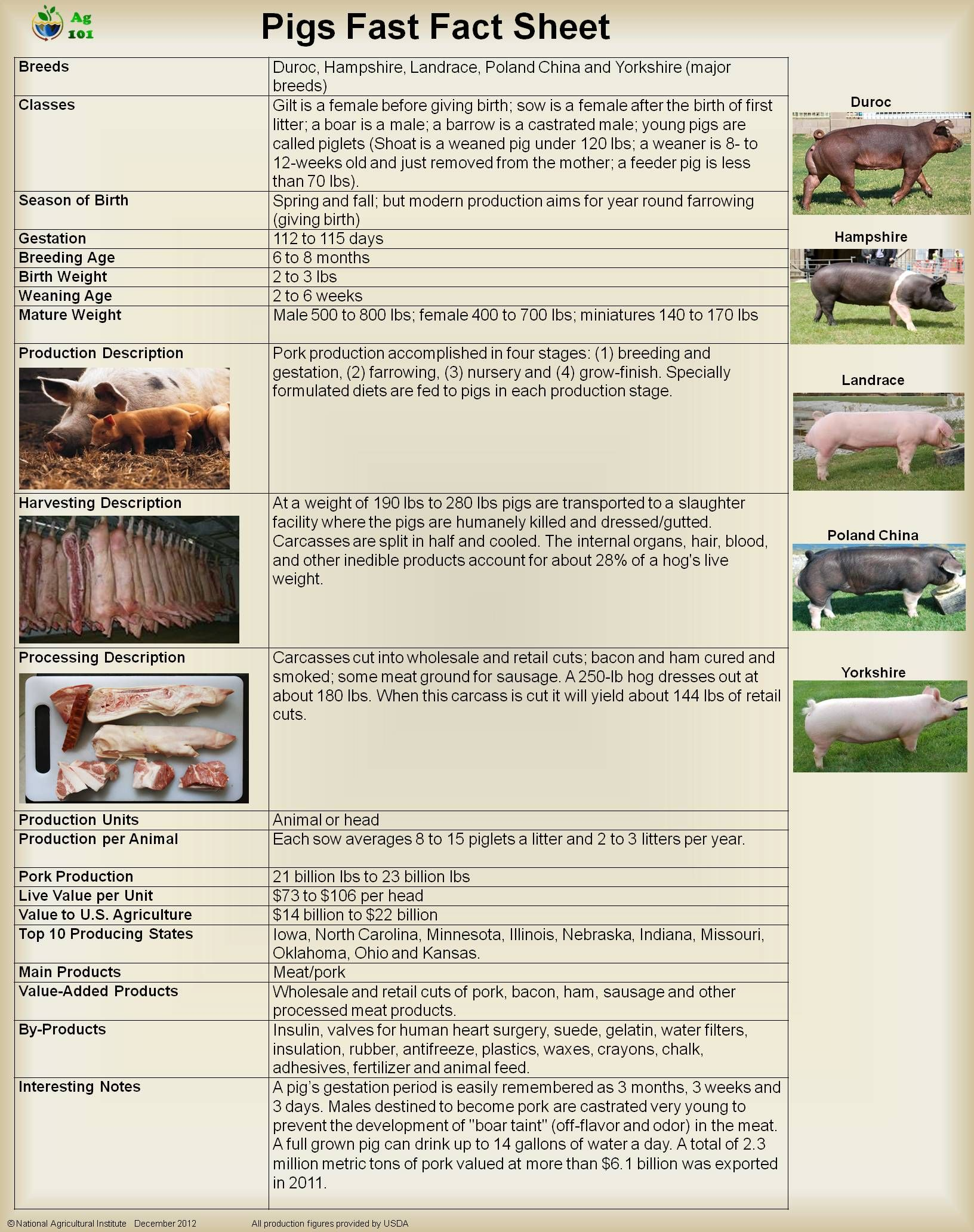 Fast Facts About Pigs