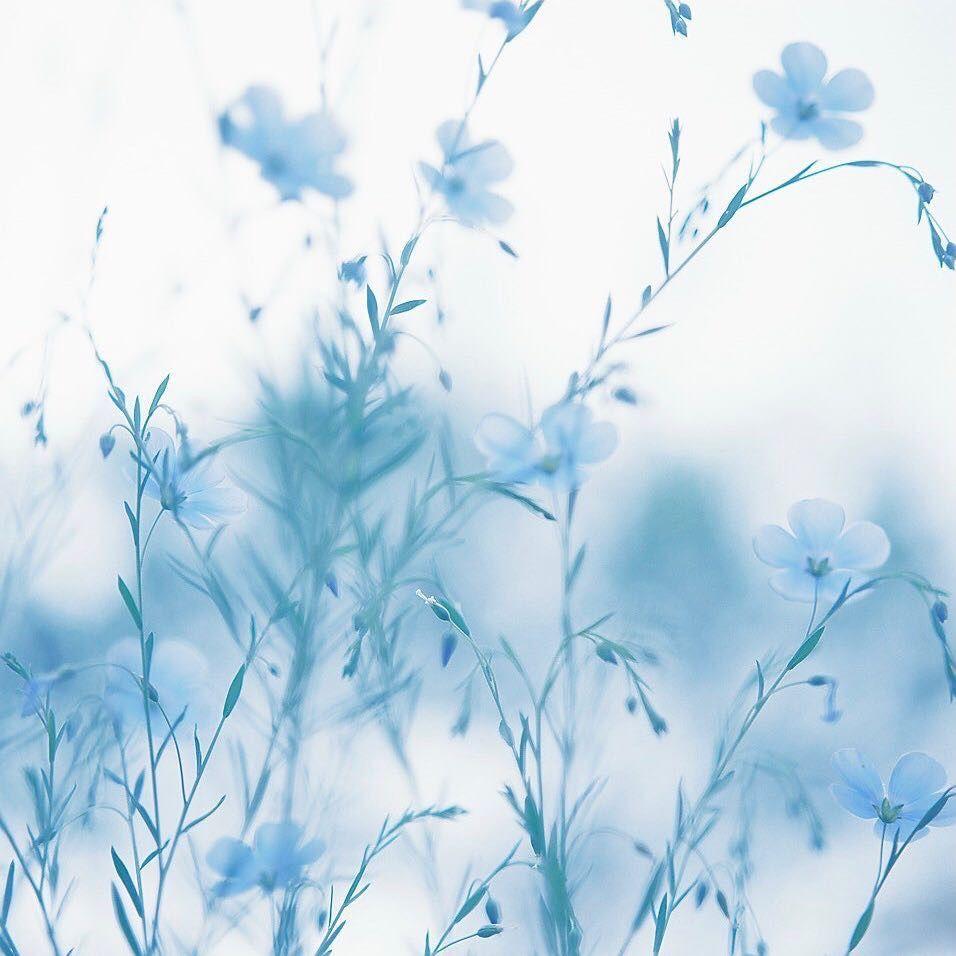 Нежно голубые картинки на аву