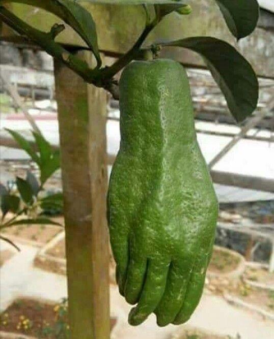 ドッキリ!人の手のような野菜のスマホ壁紙