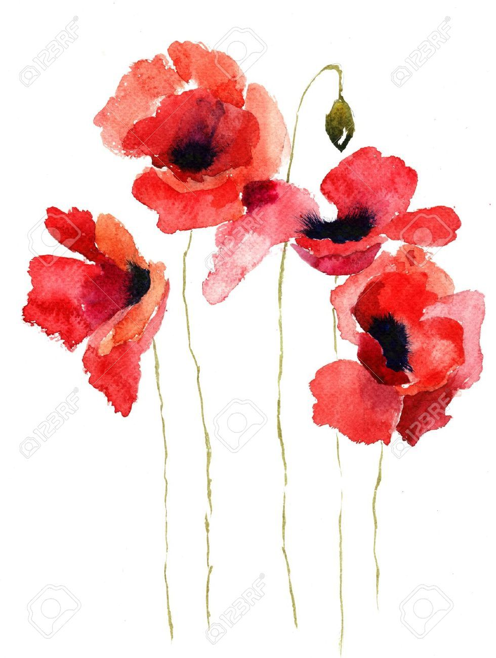 Pin by ou2 tre on poppies mak pinterest watercolor watercolor buy the royalty free stock image watercolor poppy flower online all image rights included high resolution picture for print web social media mightylinksfo