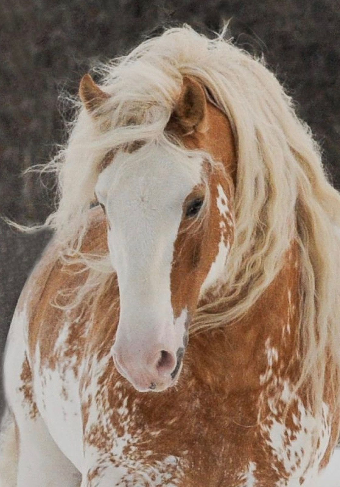 Pin Von Anna Auf Horses Pferde Schone Pferde Schonste Pferde