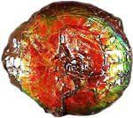 How are Ammonites Used in FengShui?