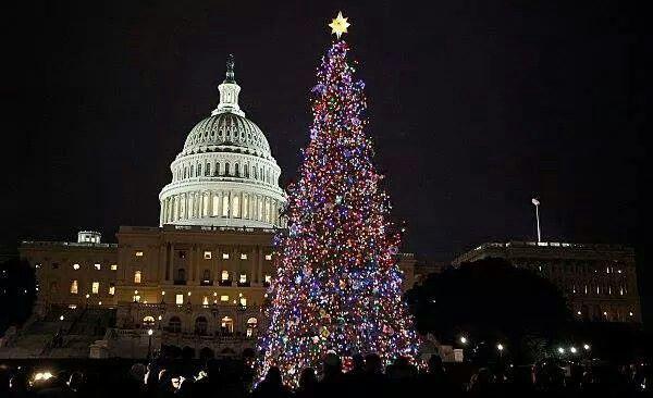 christmas tree in washington dc - Washington Dc Christmas Tree