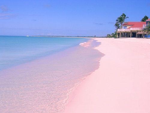 The Best Beaches In Caribbean Palm Beach Antigua Barbados