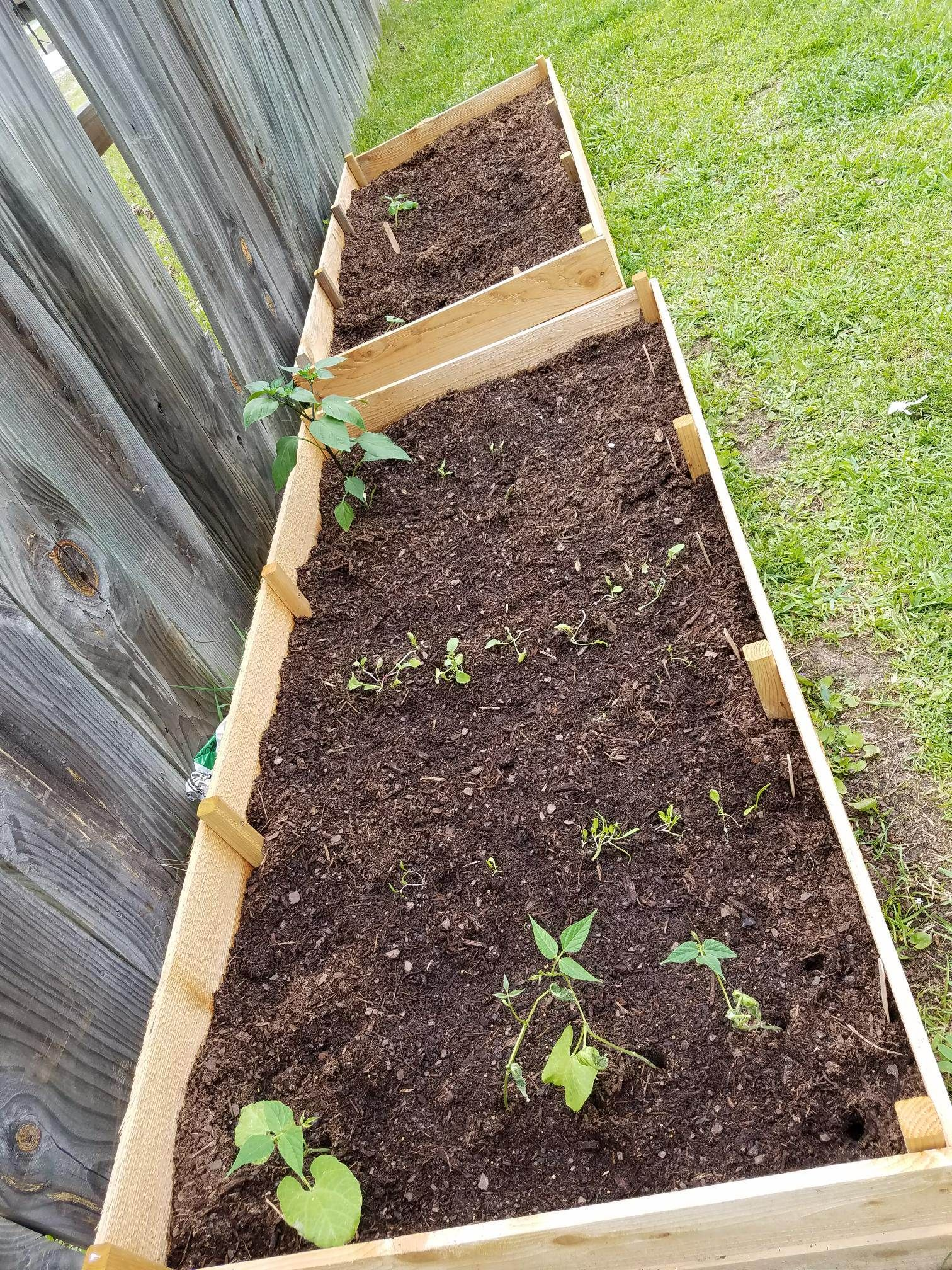 How to Start Your Raised-Bed and Container Garden ...