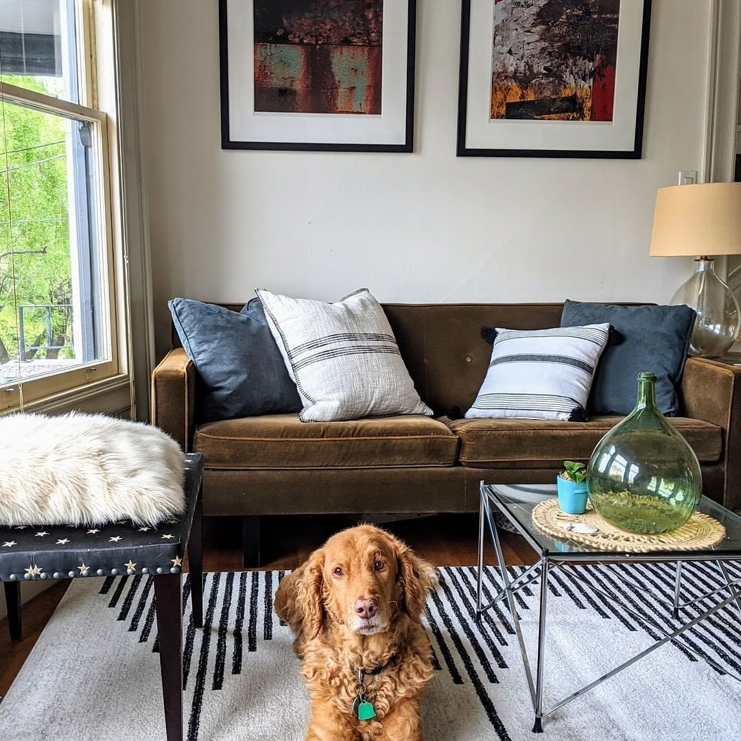 Poly Bark On Instagram Mans Best Friend Our Mekko Area Rug Best Friends Foreverrrrrrr Terrylynn Sfrealtor In 2020 Poly Bark Comfy Rugs Area Rugs