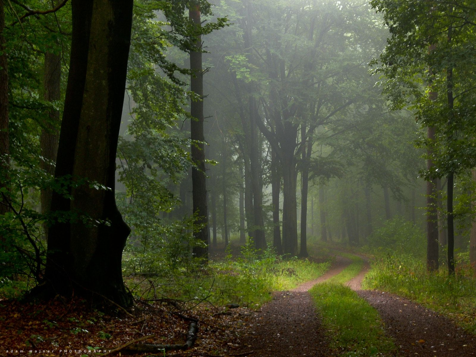 Forest After Rain Null In 2020 Forest Landscape Forest Landscape