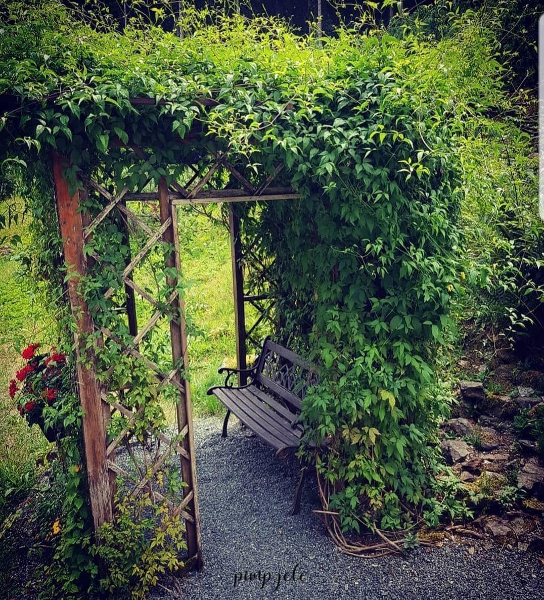 Dieses Schattige Platzchen Hab Ich Im Botanischen Garten In Adorf Gesehen In Der Hitze Wird Es Bestimmt Ofters Mal Aufgesucht Garten Botanischer Garten Sehen