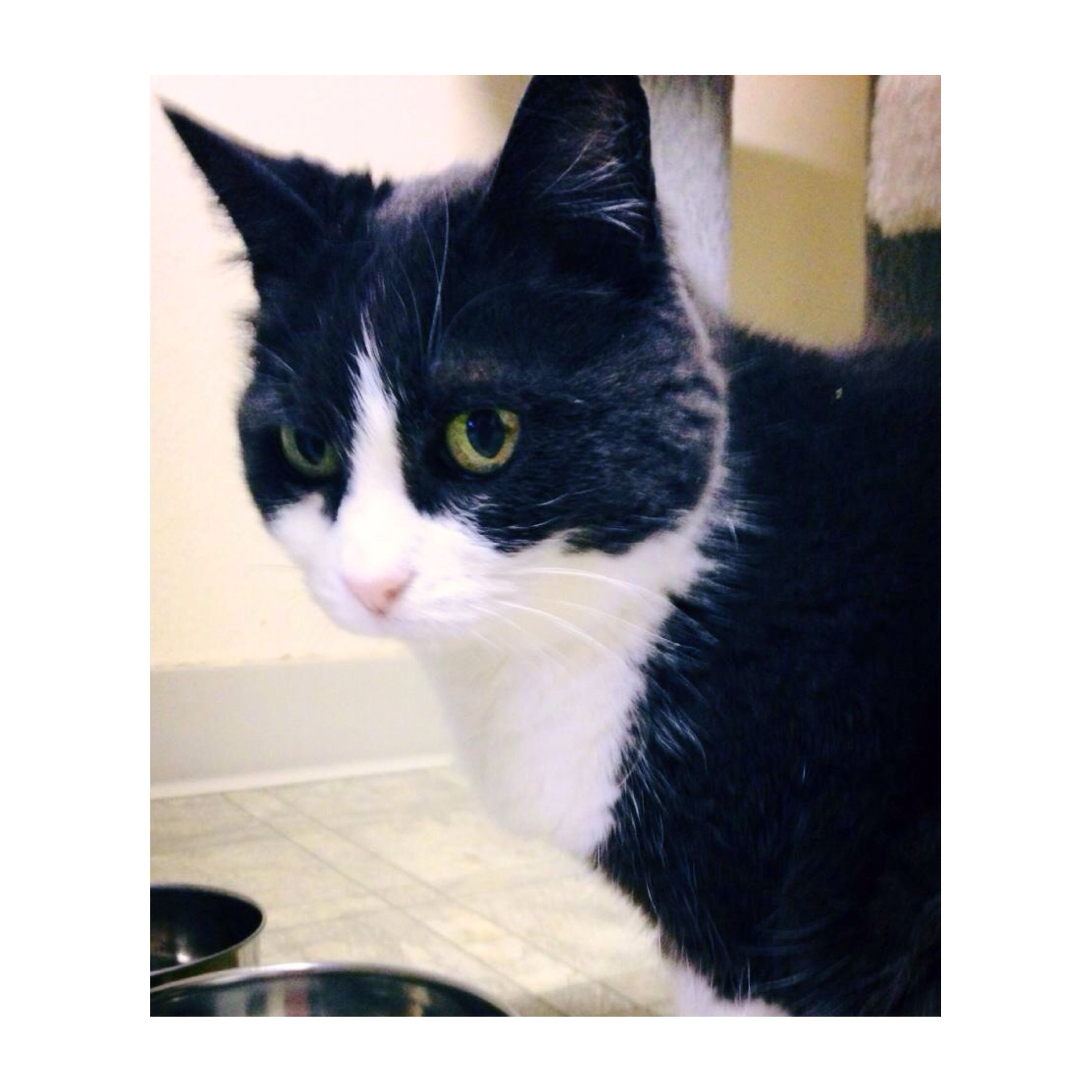 Priscilla Is Available For Adoption At Animal Aid Animal Aid 5335 Sw 42nd Ave Portland Or 97221 503 292 6628 Fax 503 296 4957 Adoption Cats Pets