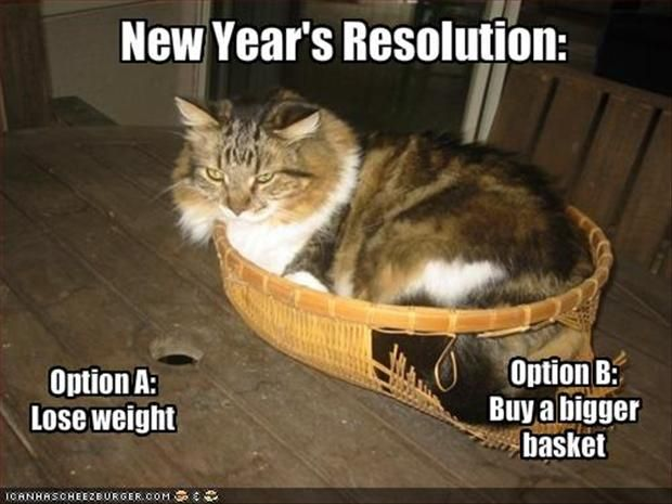 Option A Or B They Decided To Send Me To Petco For A Bigger Basket Cat Jokes Happy New Year Funny New Years Resolution Funny