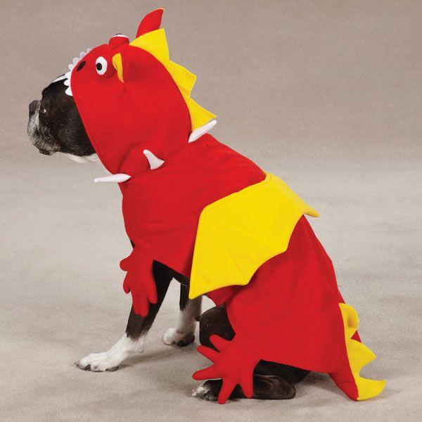 Dragon Halloween Dog Costume at BaxterBoo