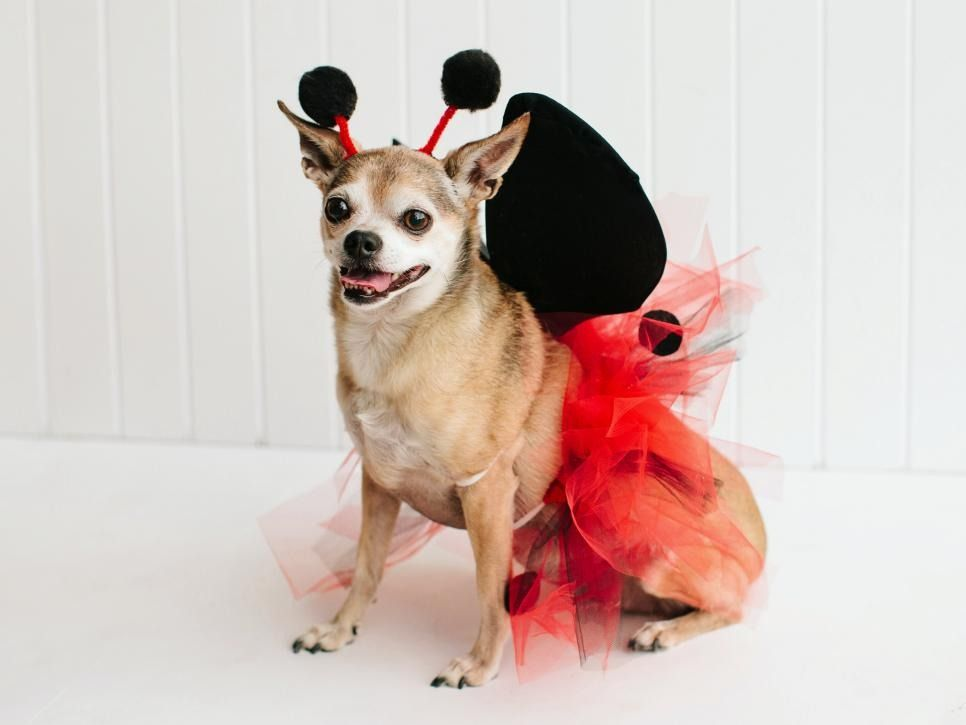 Easy do it yourself dog halloween costumes cartoonview 10 cute pet costumes you can easily make yourself solutioingenieria Images
