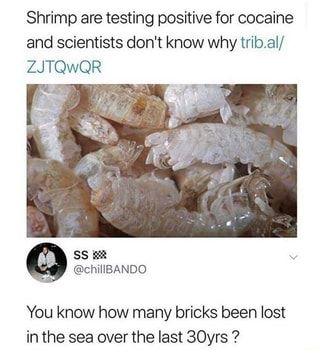 Shrimp are testing positive for cocaine and scientists don't know why trib.al/ ZJTQWQR You know how many bricks been lost in the sea overthe last 30yrs ? - )