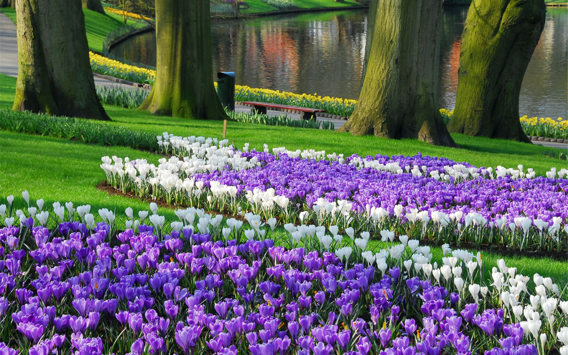 Keukenhof Largest Garden Wallpaper HD Garden vines