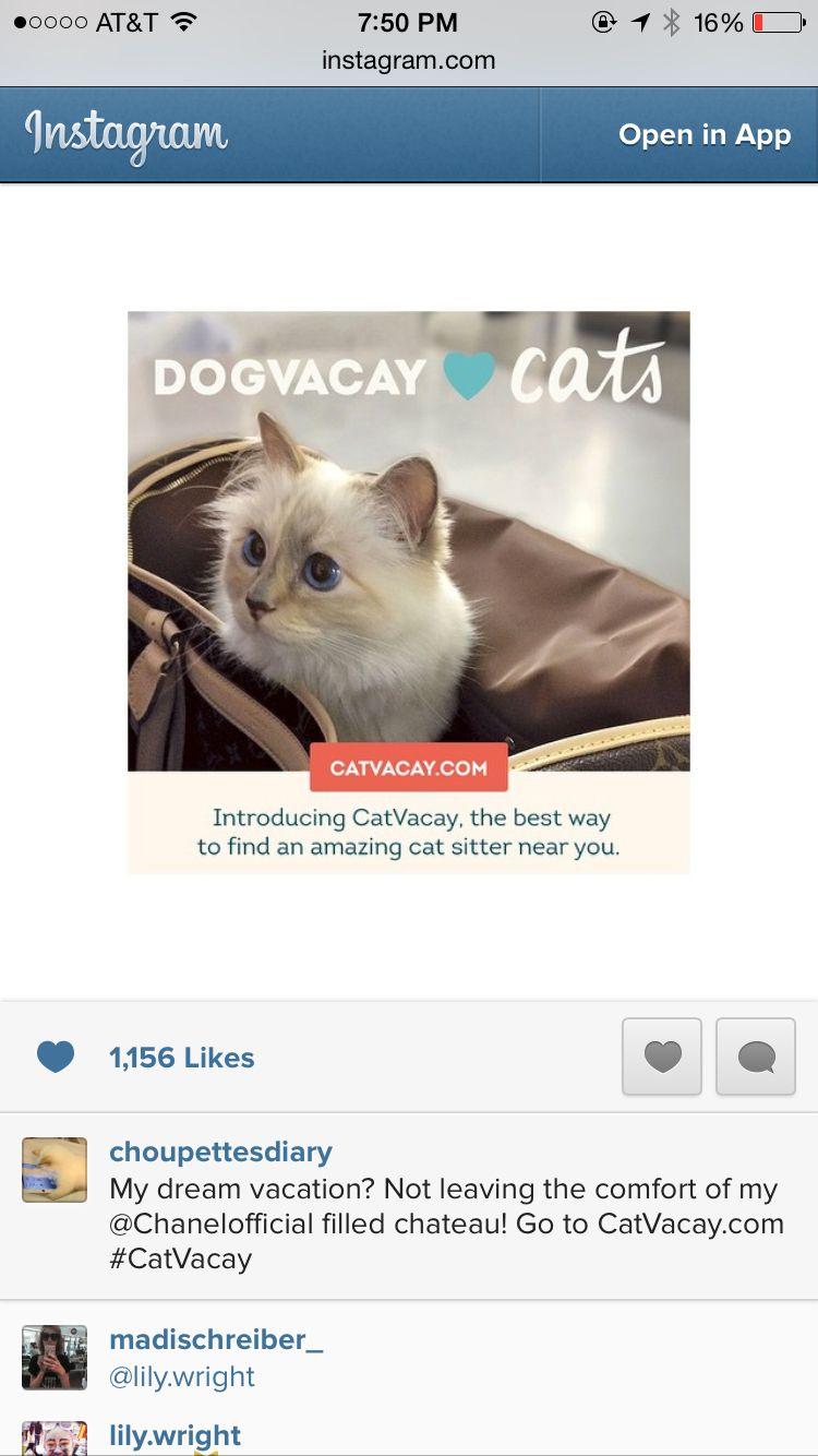 Karl Lagerfeld Cat Instagram