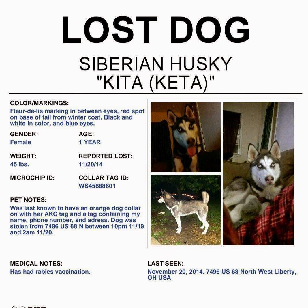 East Liberty Oh Lost Siberian Husky Kita Please Hep Find Her
