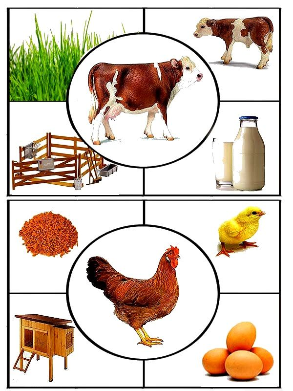 Чем питаются домашние животные картинки для детей