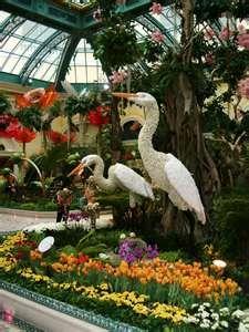 Love the Cranes
