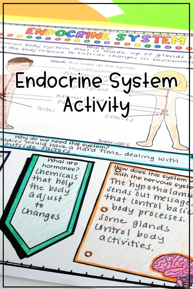 Endocrine System Activity in 2020 Endocrine system