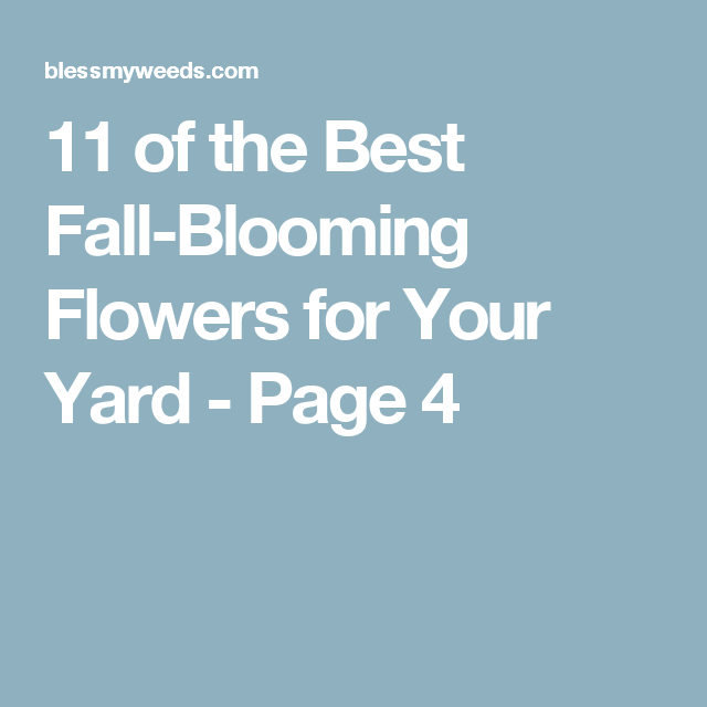 11 of the Best Fall-Blooming Flowers for Your Yard - Page 4