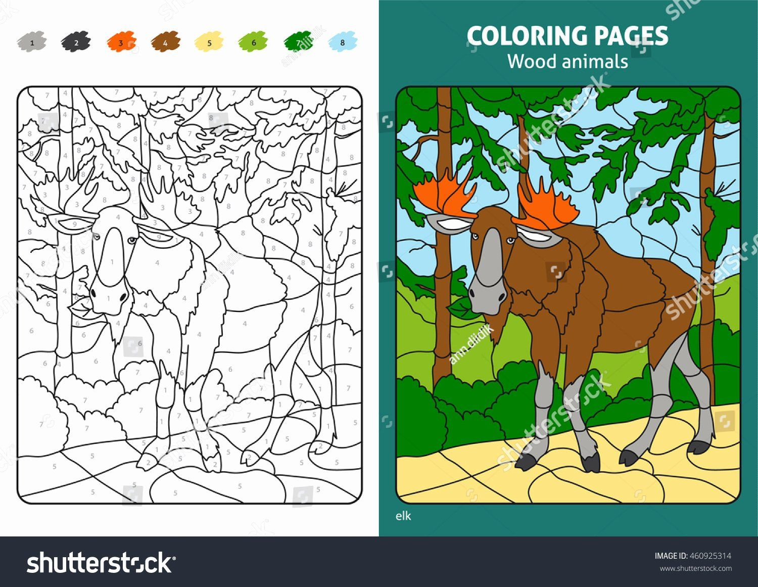 Coloring Activities Mountains Lovely Forest Coloring