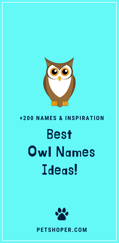 Owl Names 200 Incredible Ideas Incl Harry Potter Owl Petshoper Harry Potter Owl Harry Potter Owl Name Owl Pet