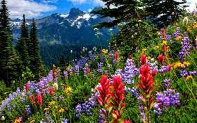 Afbeeldingsresultaat voor afbeeldingen natuur lente