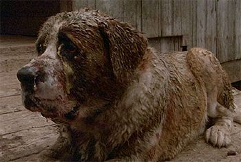Cujo From The Movie Of The Same Name With His Make Up Applied Cujo Movie Gothic Fiction Junkyard Dog