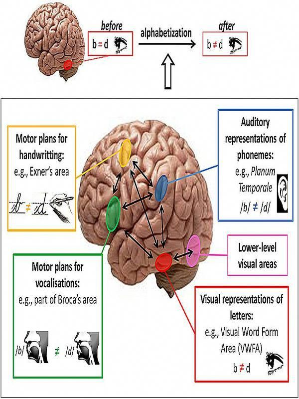 brain function supplement # | How to memorize things ...