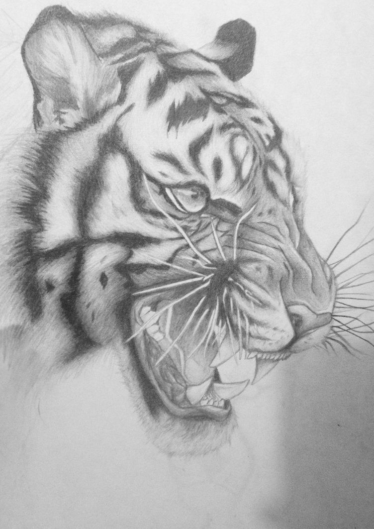 Tiger sketch by runwiththemoon