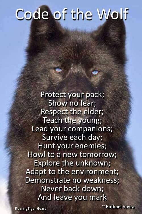 RULES) please put in your description what pack you are from and if you are an Omega or Beta or Alpha! Respect FCs! Be nice and be active! Anything is allowed! I am an alpha! Please include others (ask to join!), start drama, and have fun!