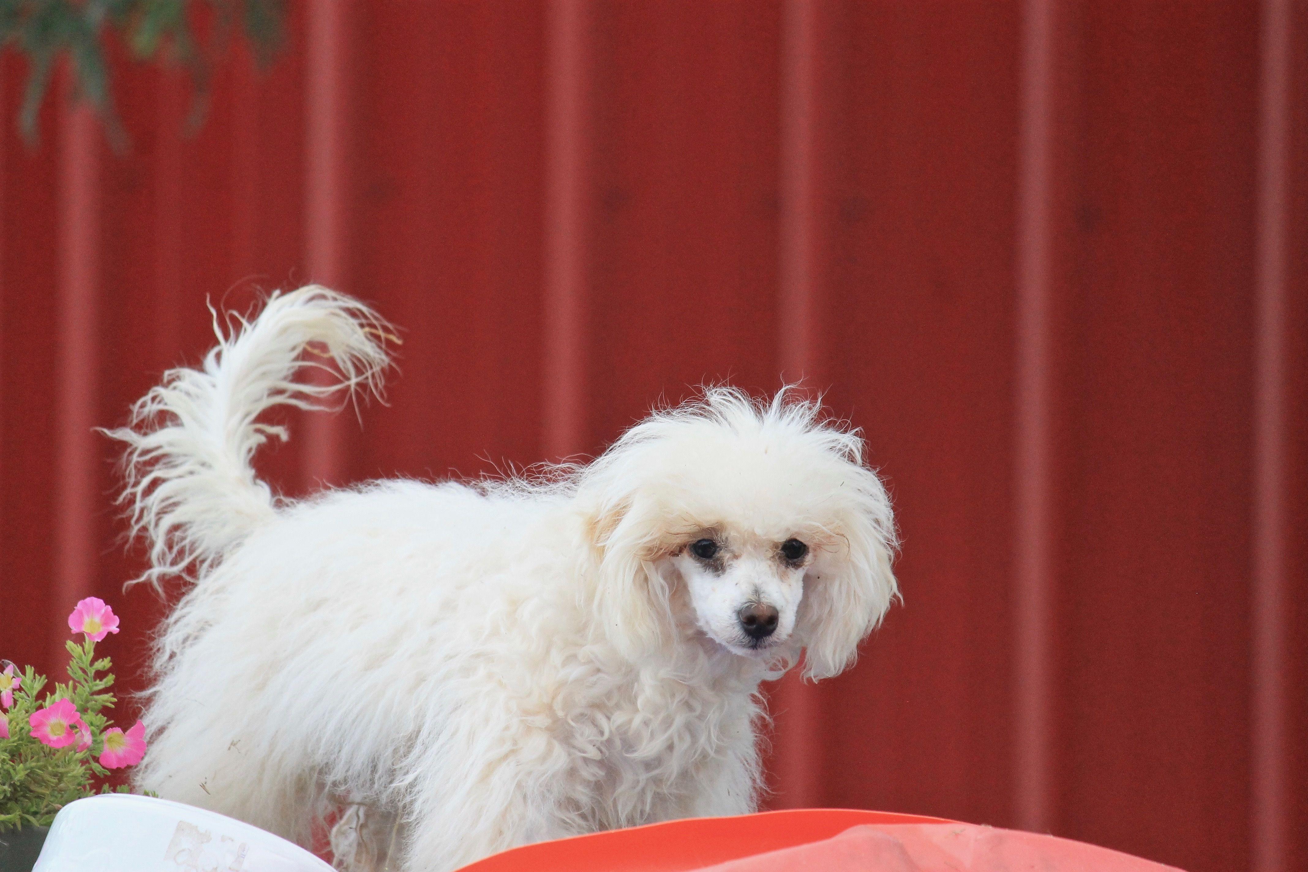 Adopt Hagi on Dog adoption, Help homeless pets, Pet search