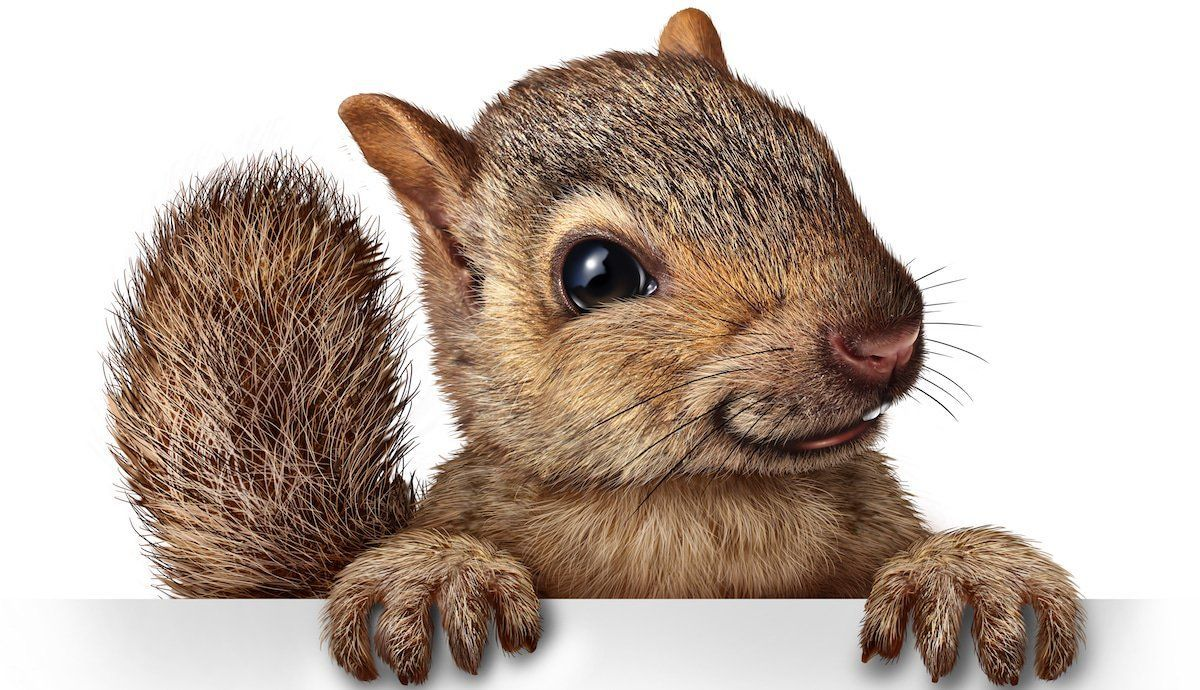 Solutions To Pronounce Difficult French Words Cute Squirrel Purple Squirrel Squirrel