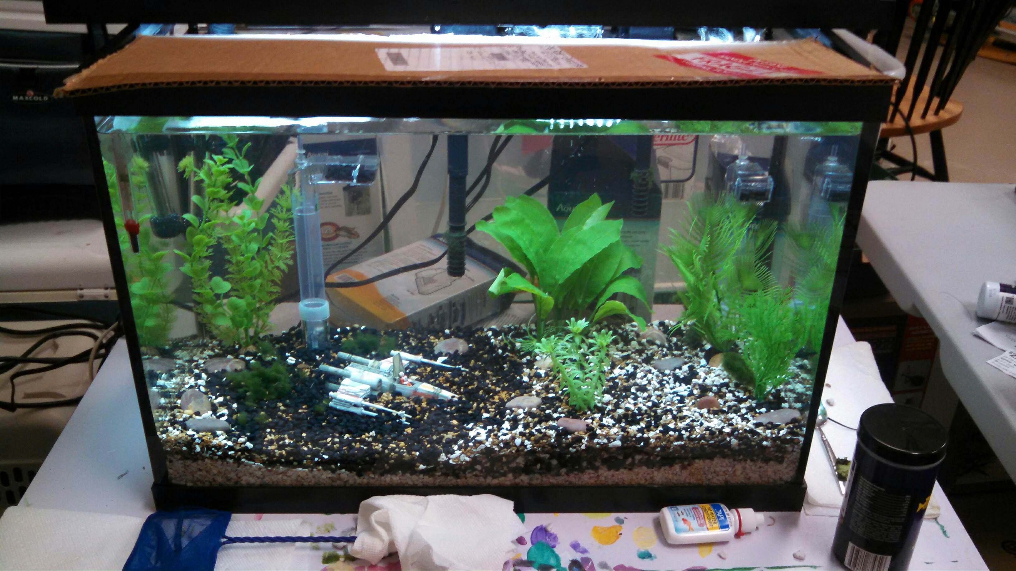 Aquarium fish tank complete system - My African Cichlids Enjoy Their Dagobah System Themed Aquarium Dagobah Is A Swamp