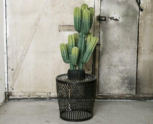 classy pictures of cactus house plants. The Classy Issue  Plant PotsHouse PlantsCacti shit Pinterest Cacti Plants and Flora